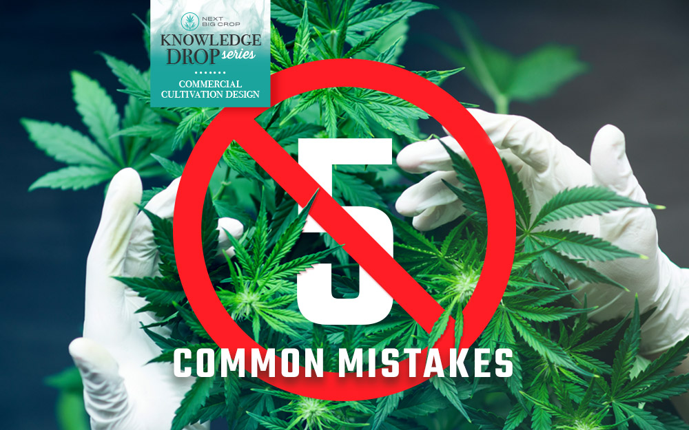 Next Big Crop Knowledge Drop Commercial Cultivation Design - 5 Common Mistakes