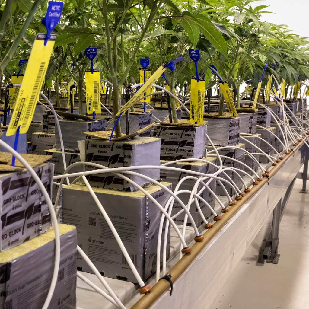 Automated Irrigation makes watering extremely efficient