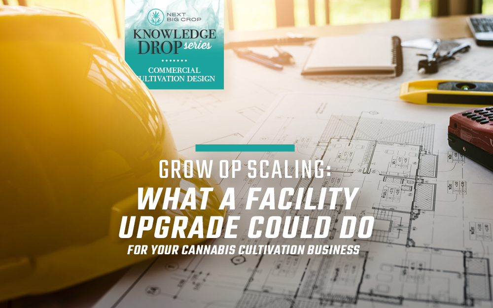 Grow Op Scaling: What a Facility Upgrade Could do for Your Cannabis Cultivation Business