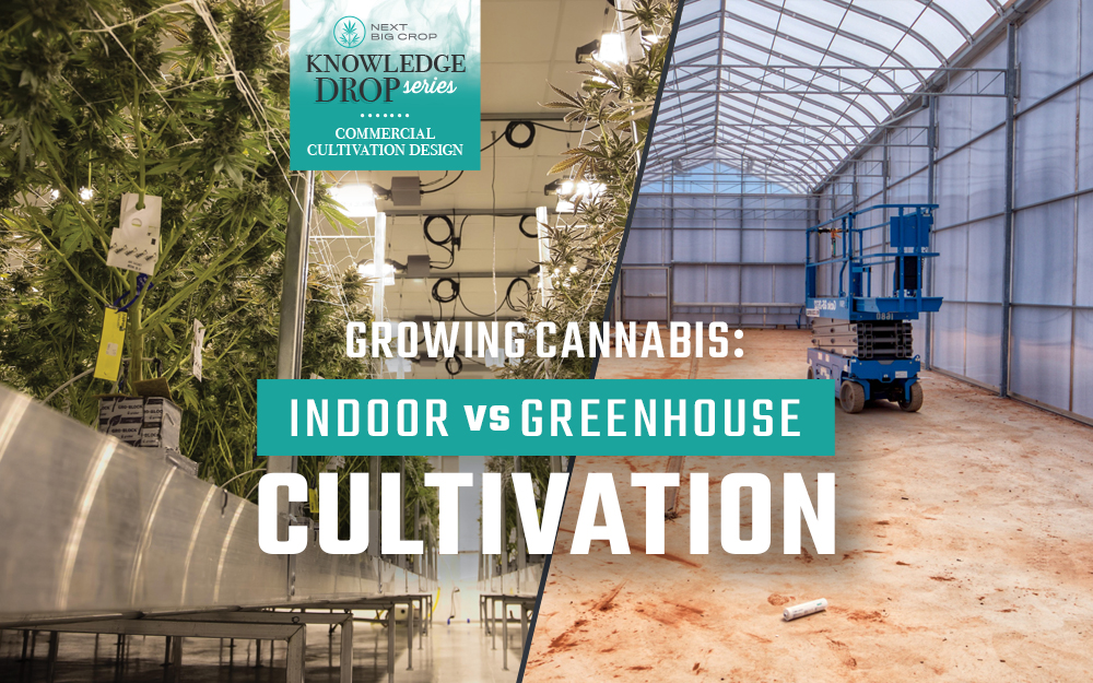 Growing Cannabis: Indoor vs. Greenhouse Cultivation