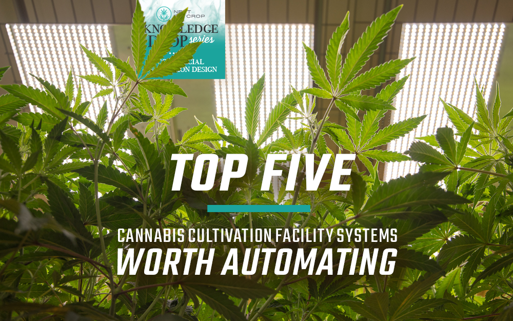 Top 5 Cannabis Cultivation Facility Systems Worth Automating