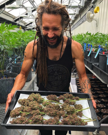 Rasta-Ronnie-High-Grade-Specialist-Seven-Five-Farm-Trim-Shot
