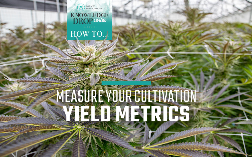 Knowledge-Drop-Series-How-To-Calculate-Your-Yield-Metrics-1000x625