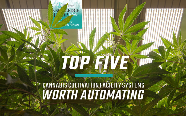 Next Big Crop Knowledge Drop Series| Top Five Cannabis Cultivation Facility Systems Worth Automating | Cannabis Plants in Room