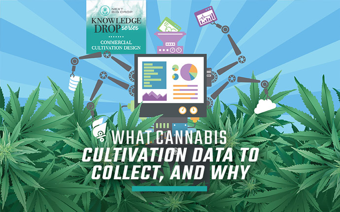 Next Big Crop Knowledge Drop Series| What cannabis Cultivation Data to Collect, and Why | Cartoon Robot Cannabis Automation