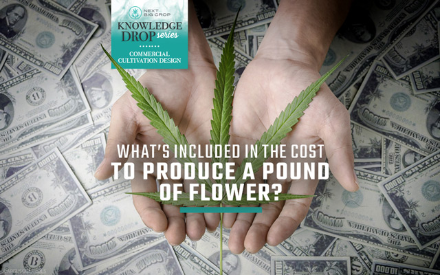 Next Big Crop Knowledge Drop Series | What's Included in the cost to produce a pound of flower? | Hands holding a cannabis leaf over US 10,000 dollar bill currency