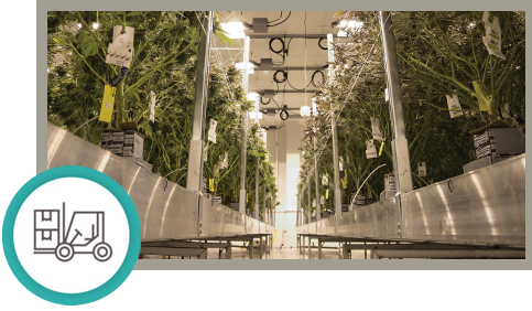 Cannabis & Equipment in a Commercial Cultivation Facility