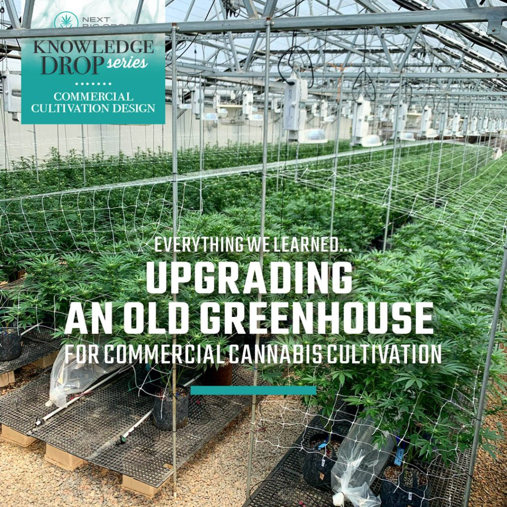 Everything We Learned Upgrading an Old Greenhouse for Cannabis Cultivation